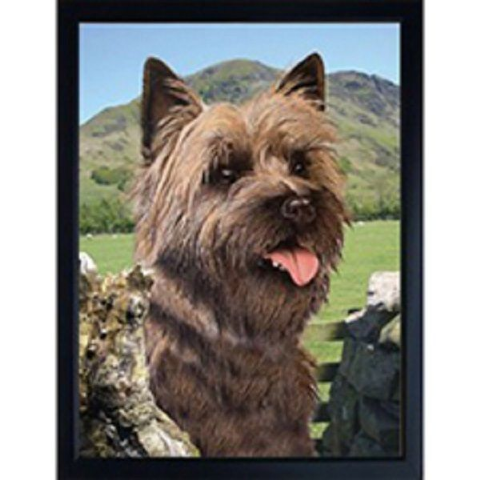 CAIRN TERRIER 3D FRIDGE MAGNET